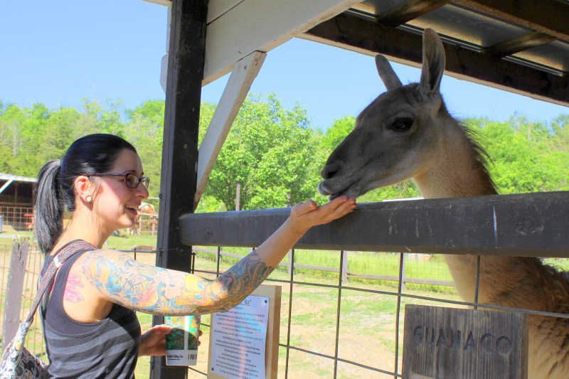 Feed and Pet a Guanaco - Smoky Mountain Deer Farm
