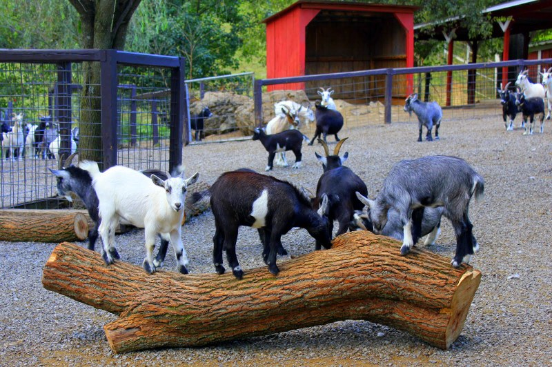 List Of Synonyms And Antonyms Of The Word Petting Zoo